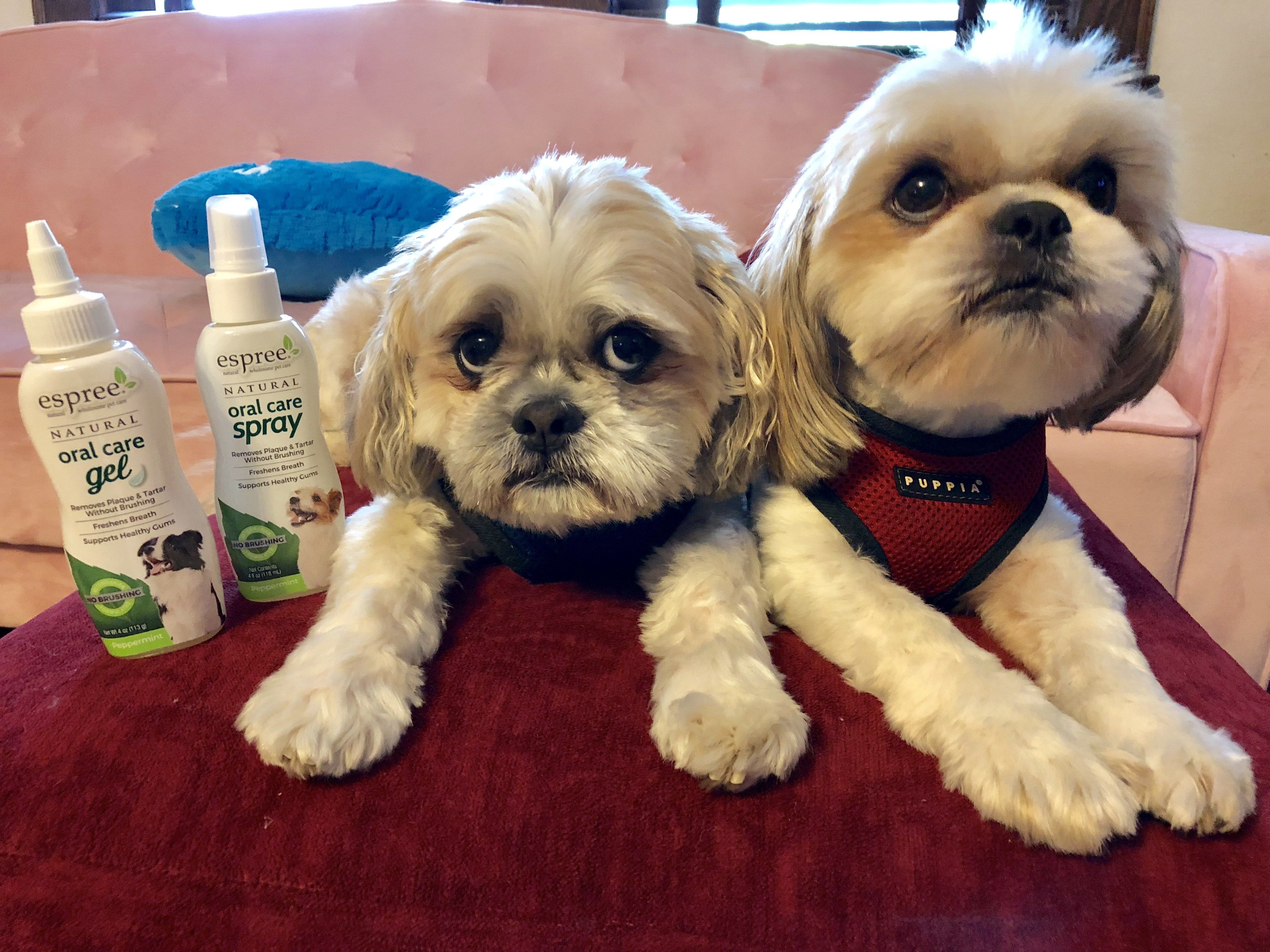 Five Ways to Keep Your Dog Healthy and Youthful in 2020 ...