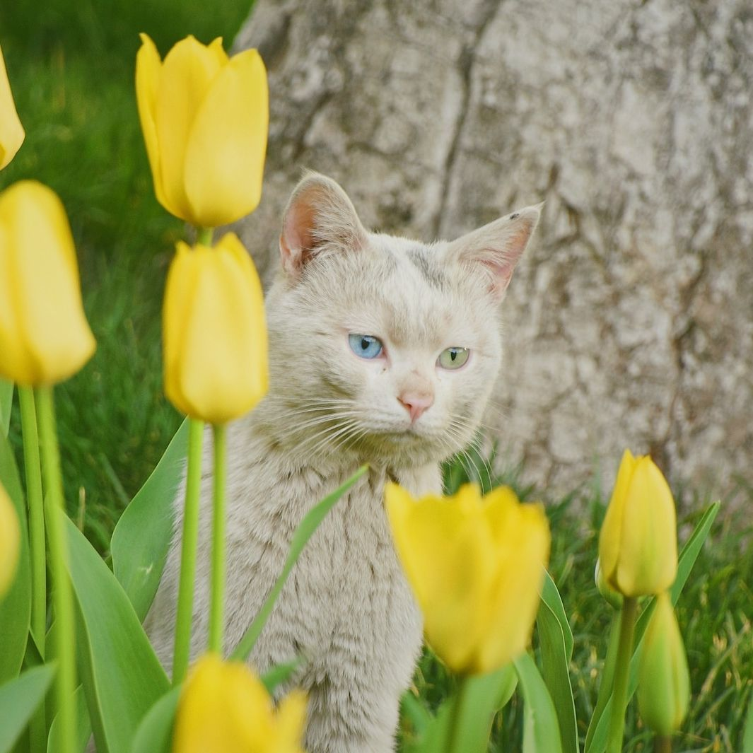 Which Is More Beautiful The Cat Or The Flowers Outdoorcat Flowercat Tulips Cat Cute Cats And Kittens Cute Animals Cats