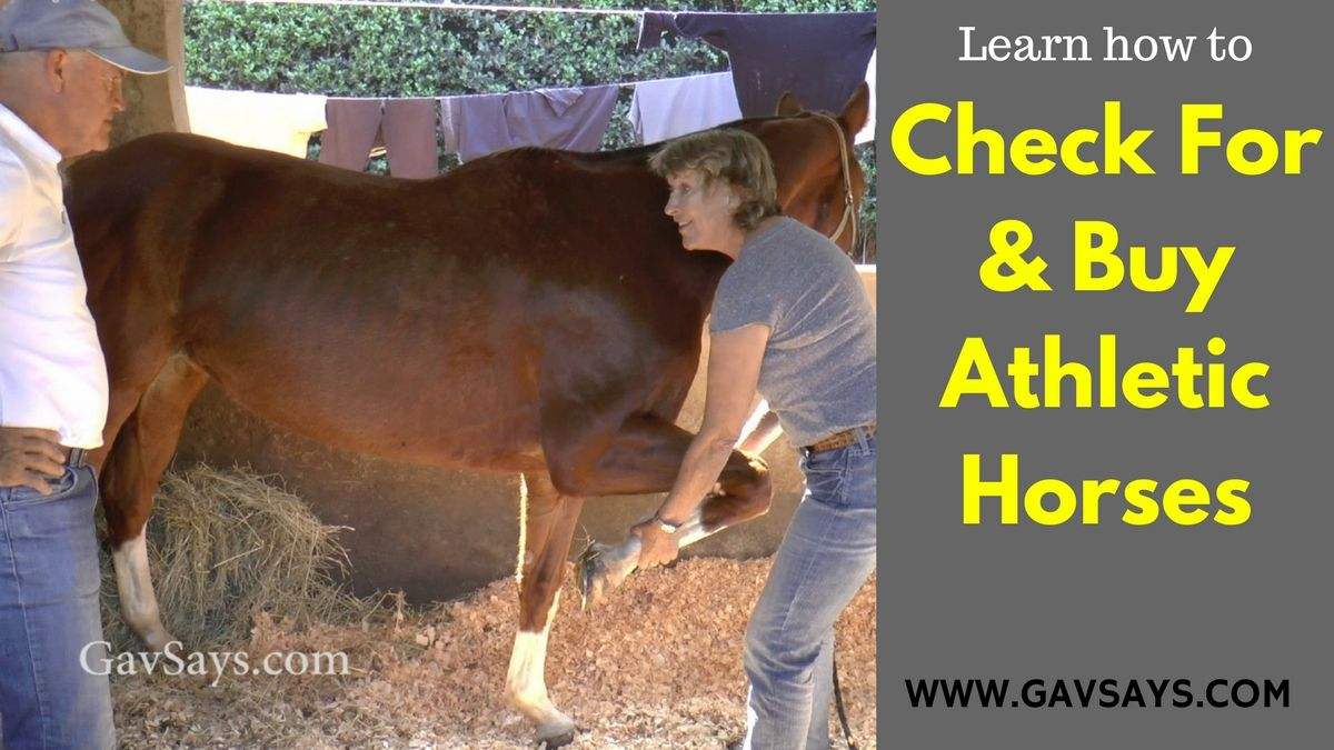 Learn how to check for & Buy Athletic Horses