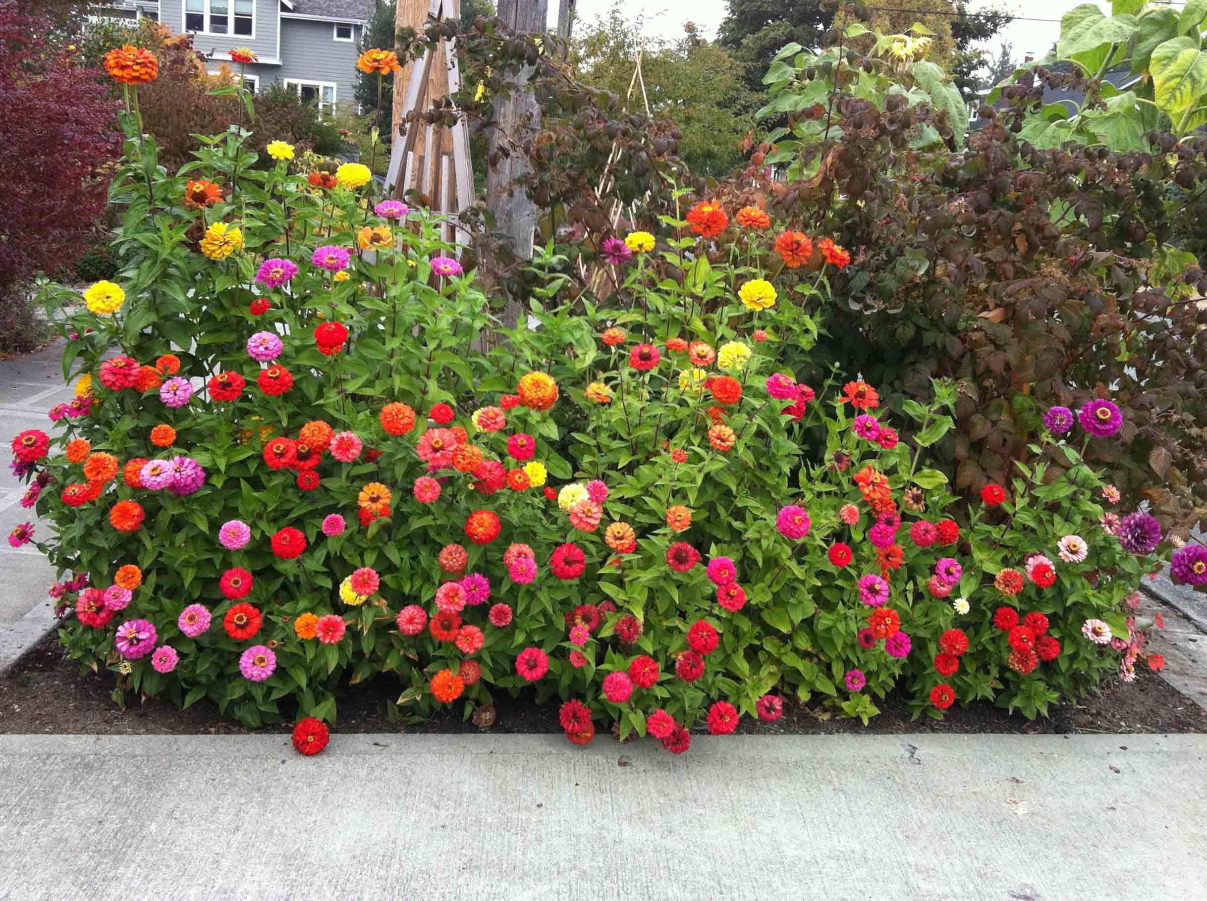 ideas small living room, ideas small business, flower garden app