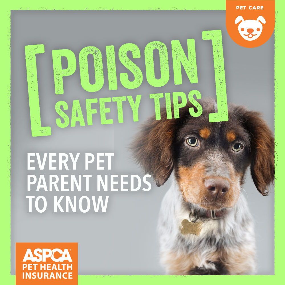 Poison Safety Tips Every Pet Parent Needs To Know Pet Insurance