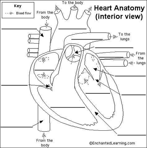 Human Ear Diagram Ks2 - Human Anatomy