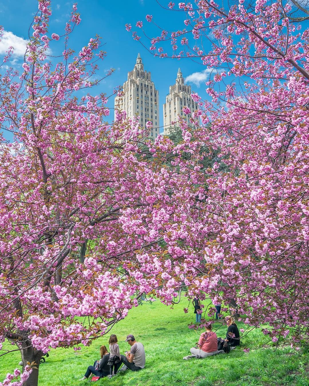 Loft Is All You Need Travel Around The World Cherry Blossom New York City