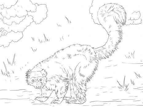Red Ruffed Lemur Animal Coloring Pages