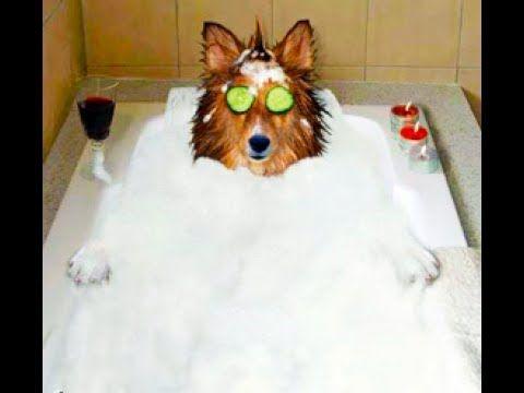 Funny Dog Bath Time Compilation Video 2017 Cucumber On Eyes Dog