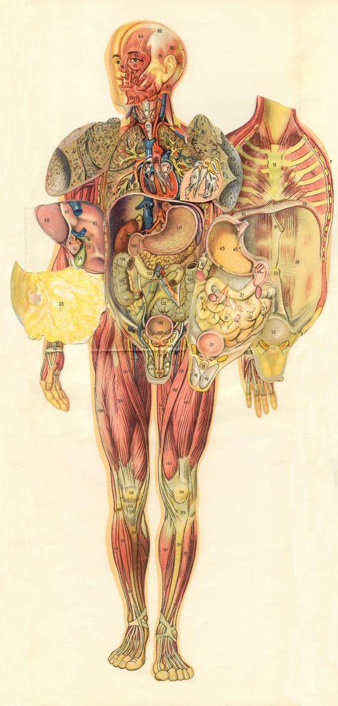homme 4d   Anatomía, Cuerpo humano y Cuerpo