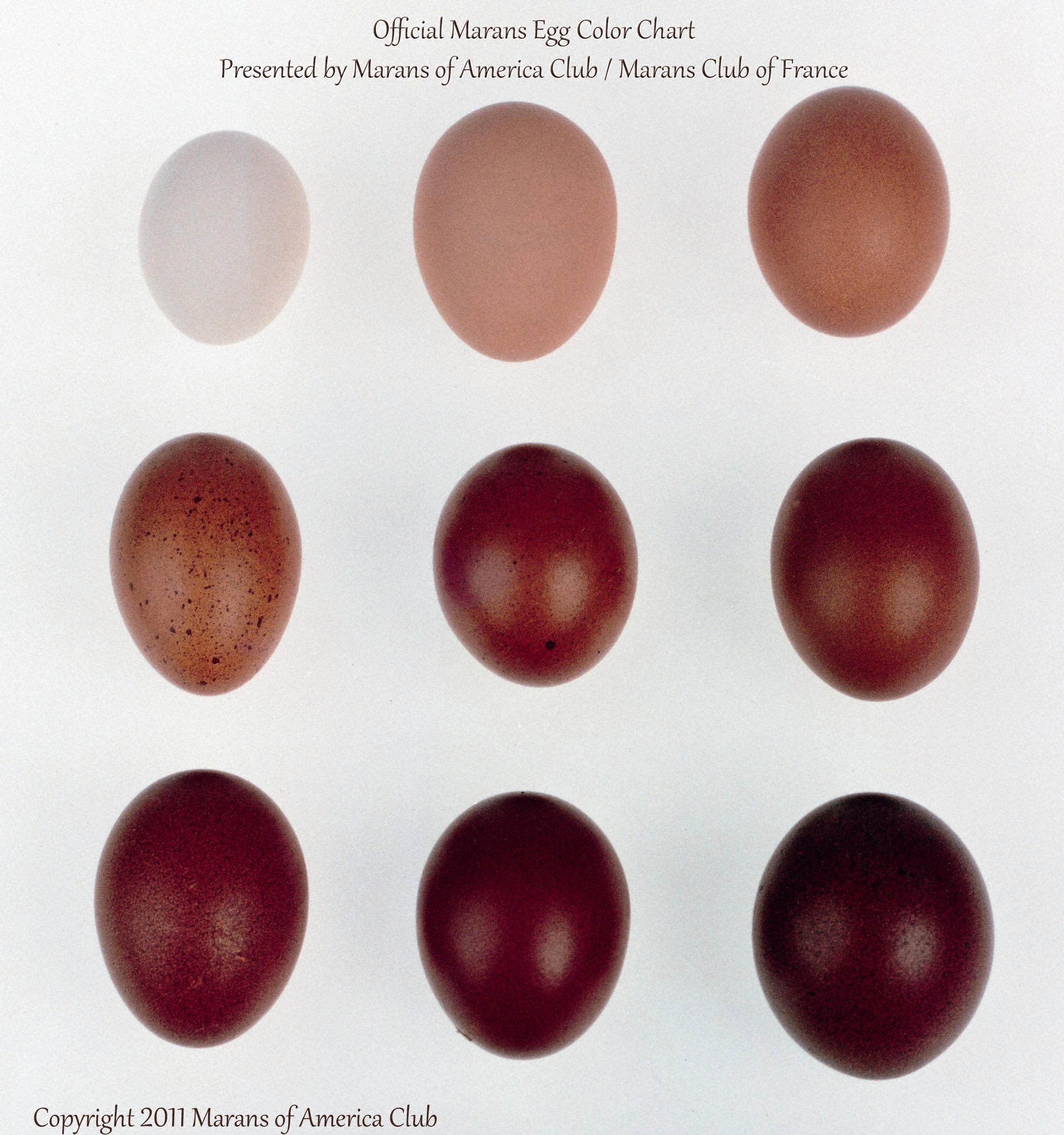 Official marans egg color chart presented by marans of america official marans egg color chart presented by marans of america club nvjuhfo Gallery