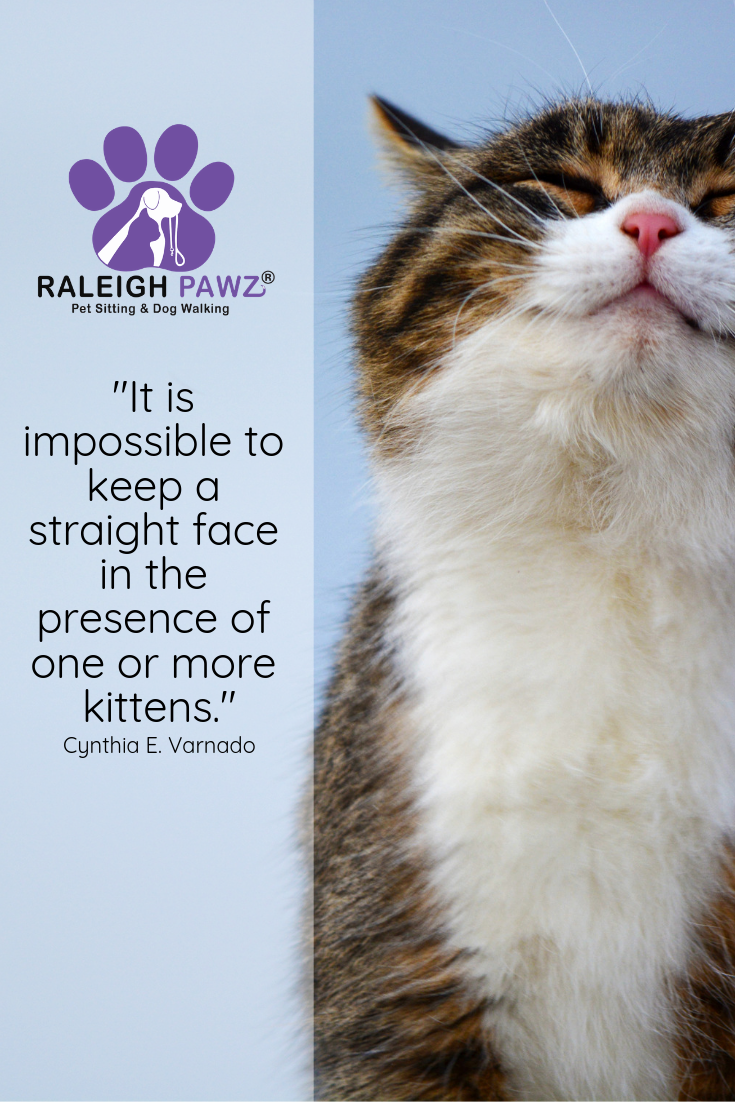 It Is Impossible To Keep A Straight Face In The Presence Of One Or More Kittens Cynthia E Varnado Pretty Cats Kittens Funny Animal Pictures