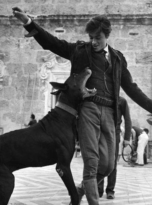 Ален Делон – собачий чемпион! (с изображениями)   Ален ...