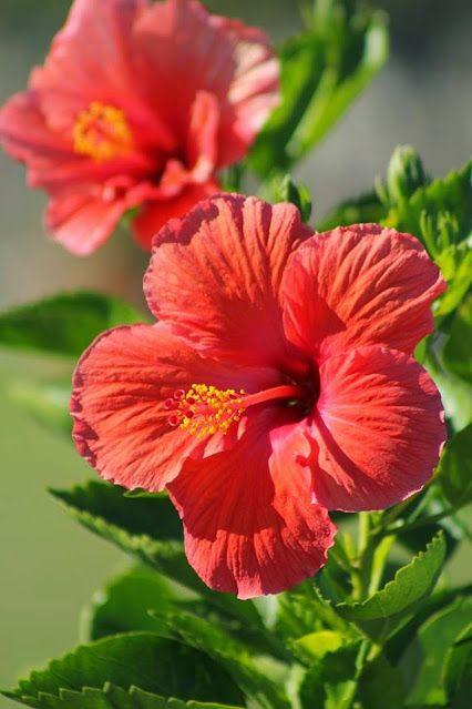 Google Wonderful Flowers Flowers Photography Amazing Flowers