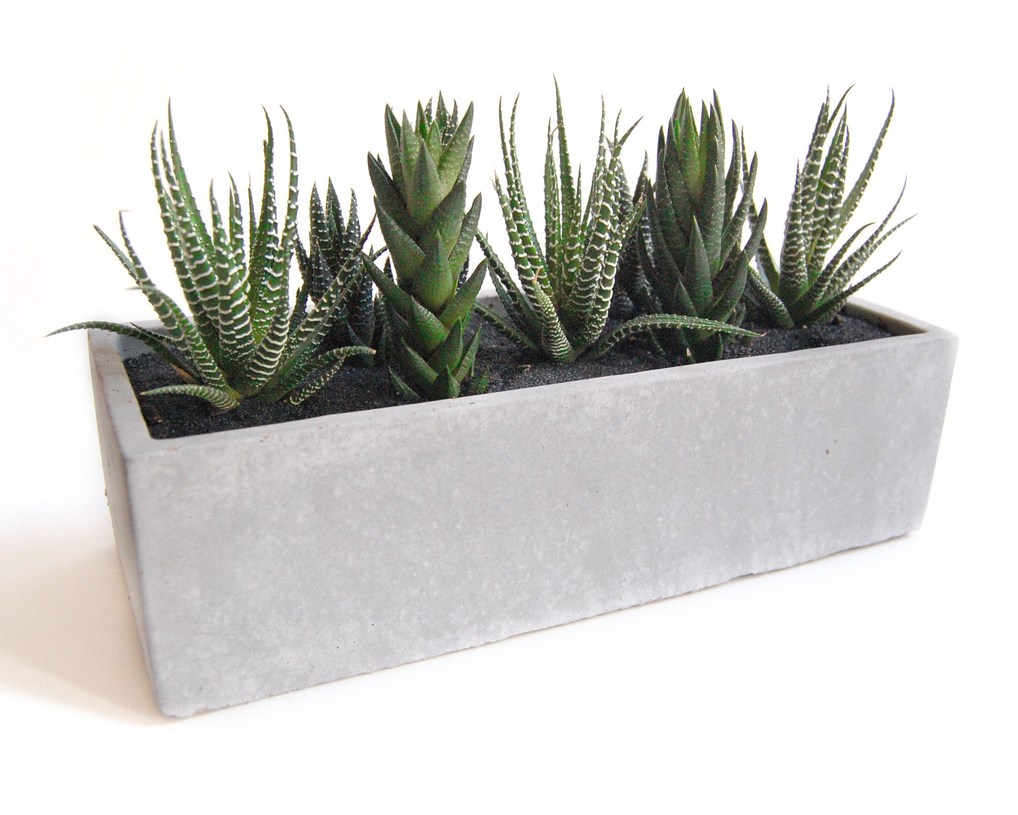 Collection of Cacti in a Modern Grey Planter
