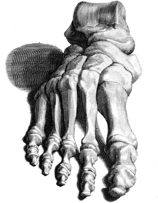 skeleton foot | Skeleton | Pinterest | Vintage clip art, Vintage ...