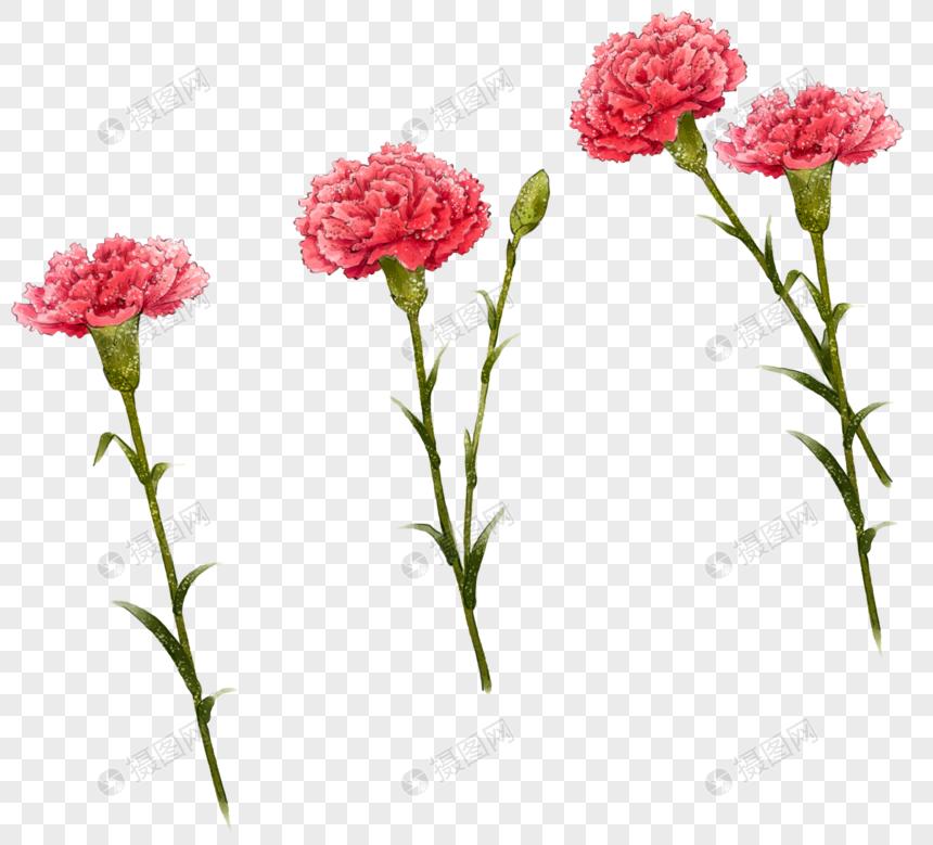 Carnation Carnations Mother S Day Flowers Plants Petals Flowers Carnations Pictures Web App Design Vi Design Carnation Flower