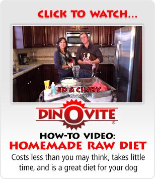 How To Video Homemade Raw Diet Cat Nutrition Dog Food Recipes