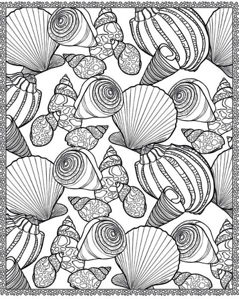 Sea Shells With Images Coloring Pages Adult Coloring Pages