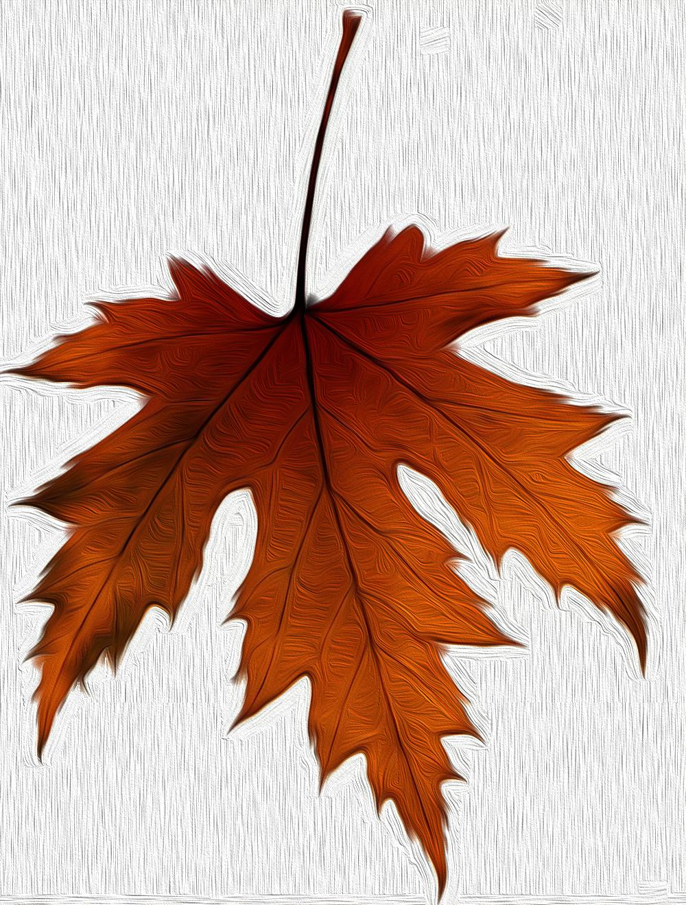 Hoja de un rbol ilustraciones gratis hojas hojas de for Arboles de hoja perenne en galicia