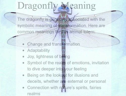 Dragonfly Meaning – Witches Of The Craft® | pagan