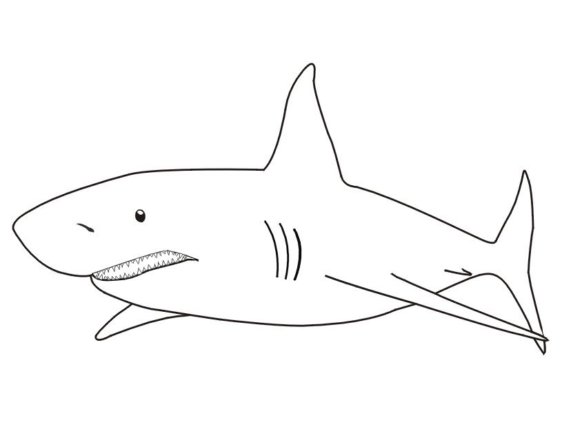 Coloriage Gratuit Requin.Coloriage Requin 15 Elegant Coloriage Requin Photograph
