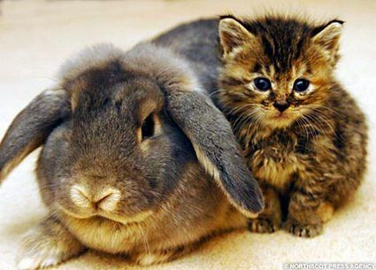 kitty and the bunny snuggling