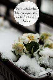 Winterharte Balkonpflanzen: Die Top 11 für Ihren Balkon #kletterpflanzenwinterhart Die Top 11 winterharten Balkonpflanzen: Im Frühling und im Sommer... #balkon #balkonpflanzen #ihren #kletterpflanzenwinterhart #winterharte #winterharten #kletterpflanzenwinterhart