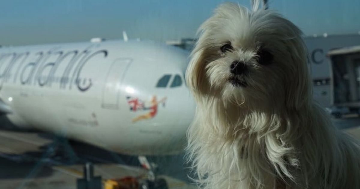 Maltese Supermodel Dog Takes Social Media By Storm Dogs Pets