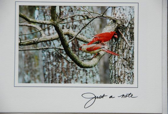 Male and Female cardinal greeting card for a by streetflowerart