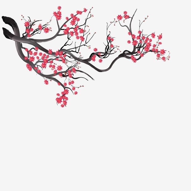 Sakura Background With Blossom Cherry Branches Hand Drawn Japanese Flowers Background Sakura Blossom Drawn Png And Vector With Transparent Background For F Blossoms Art Draw Flowers Watercolor Flower Backgrounds