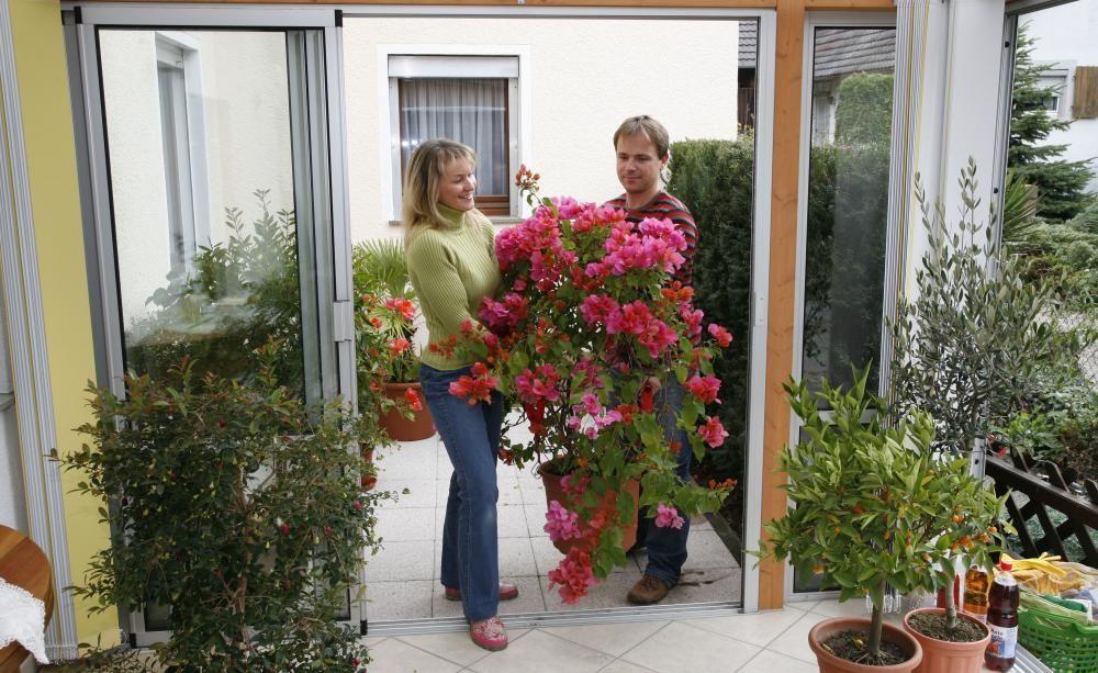 kübelpflanzen überwintern: die tipps unserer facebook-community, Hause und garten
