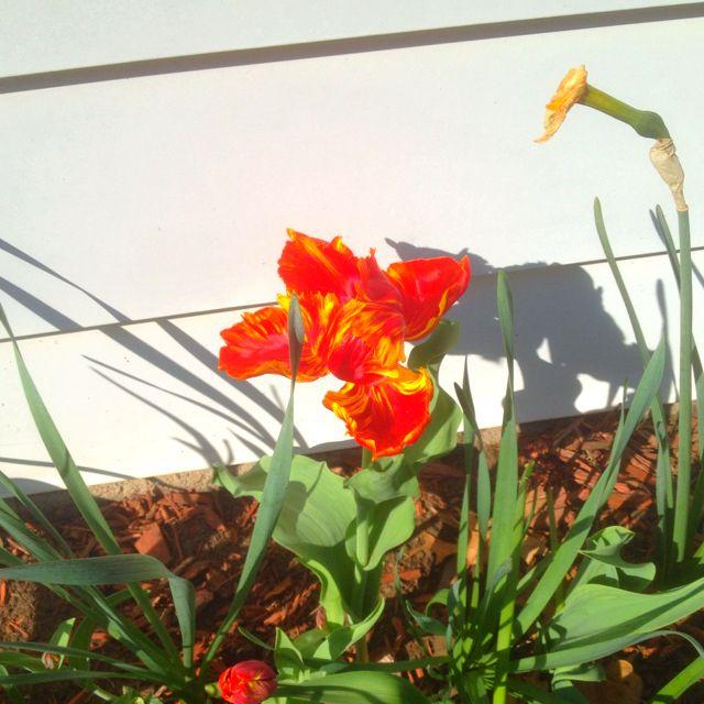 I do love spring flowers