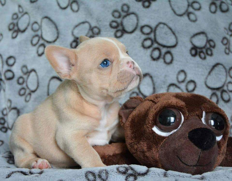 Blue Eyed Puppy With His Brown Eyed Stuffy Http Ift Tt 2i05qbp