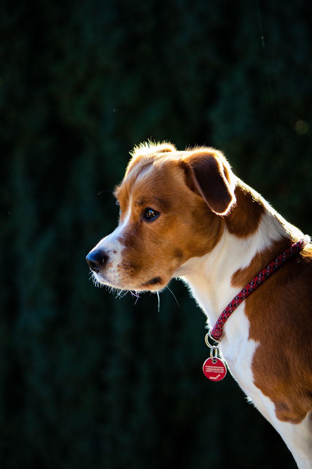 dog training classes near Denmark