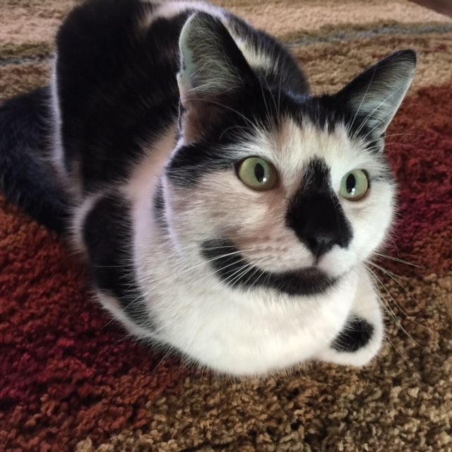Pin by Happy Jack Cats, Inc. on Happy Cats Happy cat
