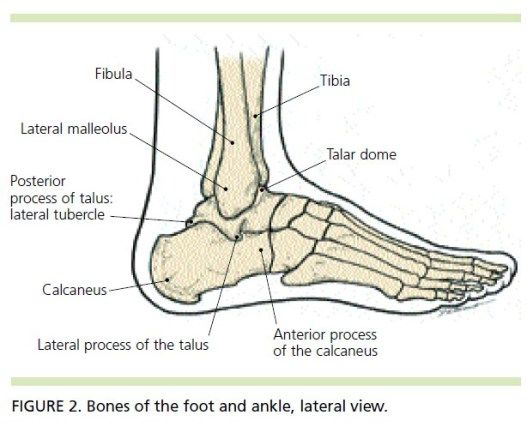 When An Ankle Sprain Is Not Just An Ankle Sprain Foot Anatomy