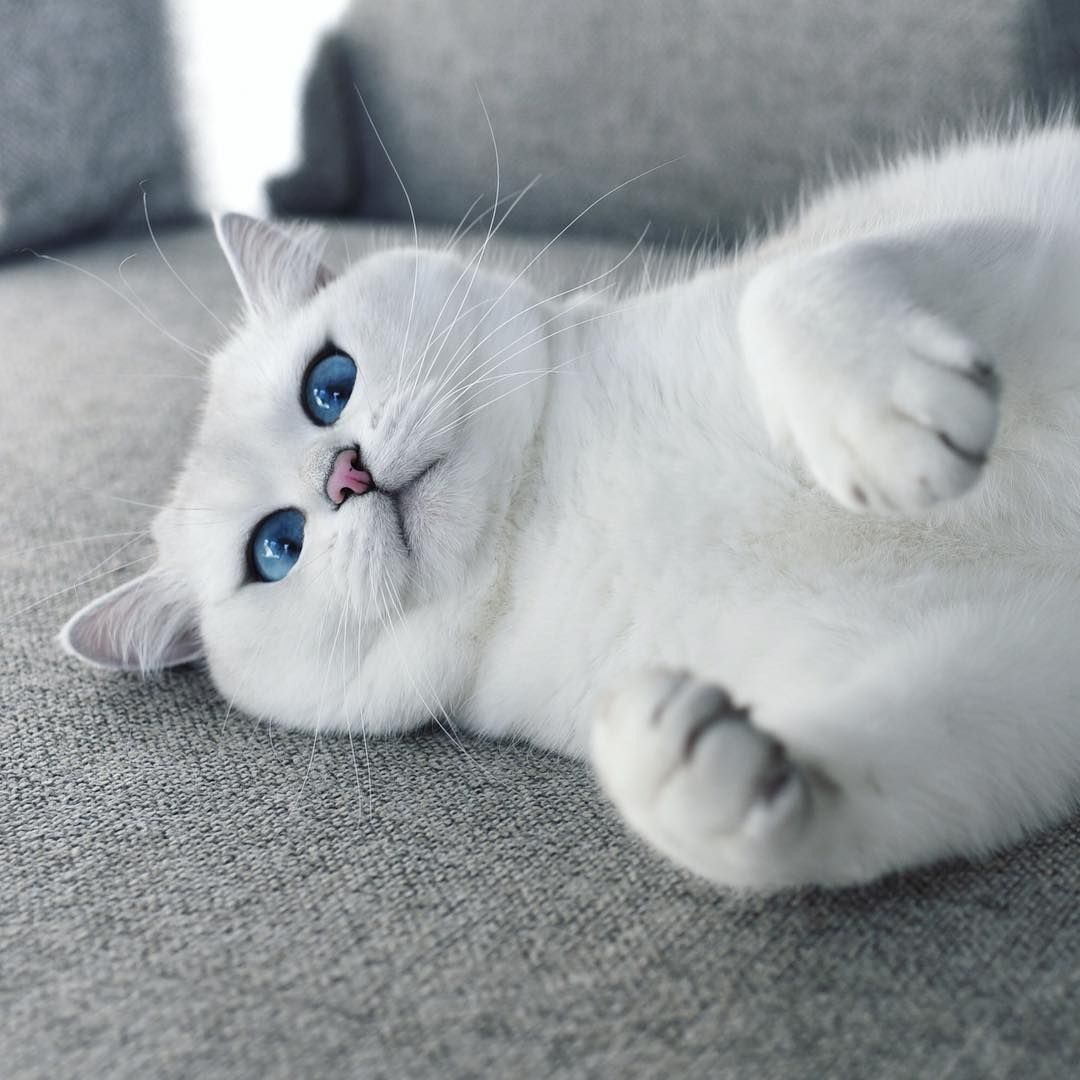 Coby The Cat On Instagram I Ll Have A Mani Pedi You Know The Usual Cute Cats Cats Cute Animals