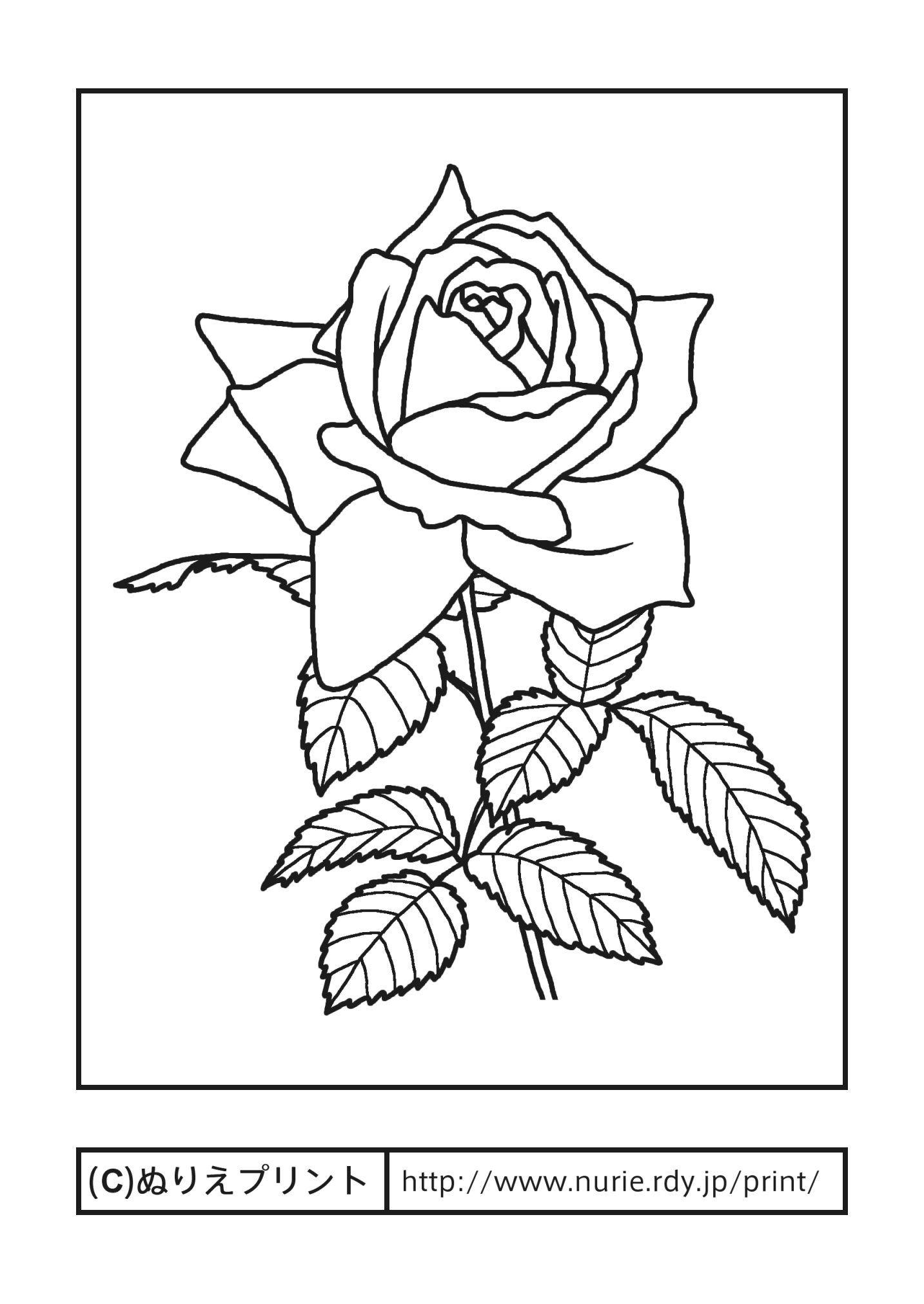 バラ薔薇主線黒茨城県の花無料塗り絵都道府県ぬりえプリント