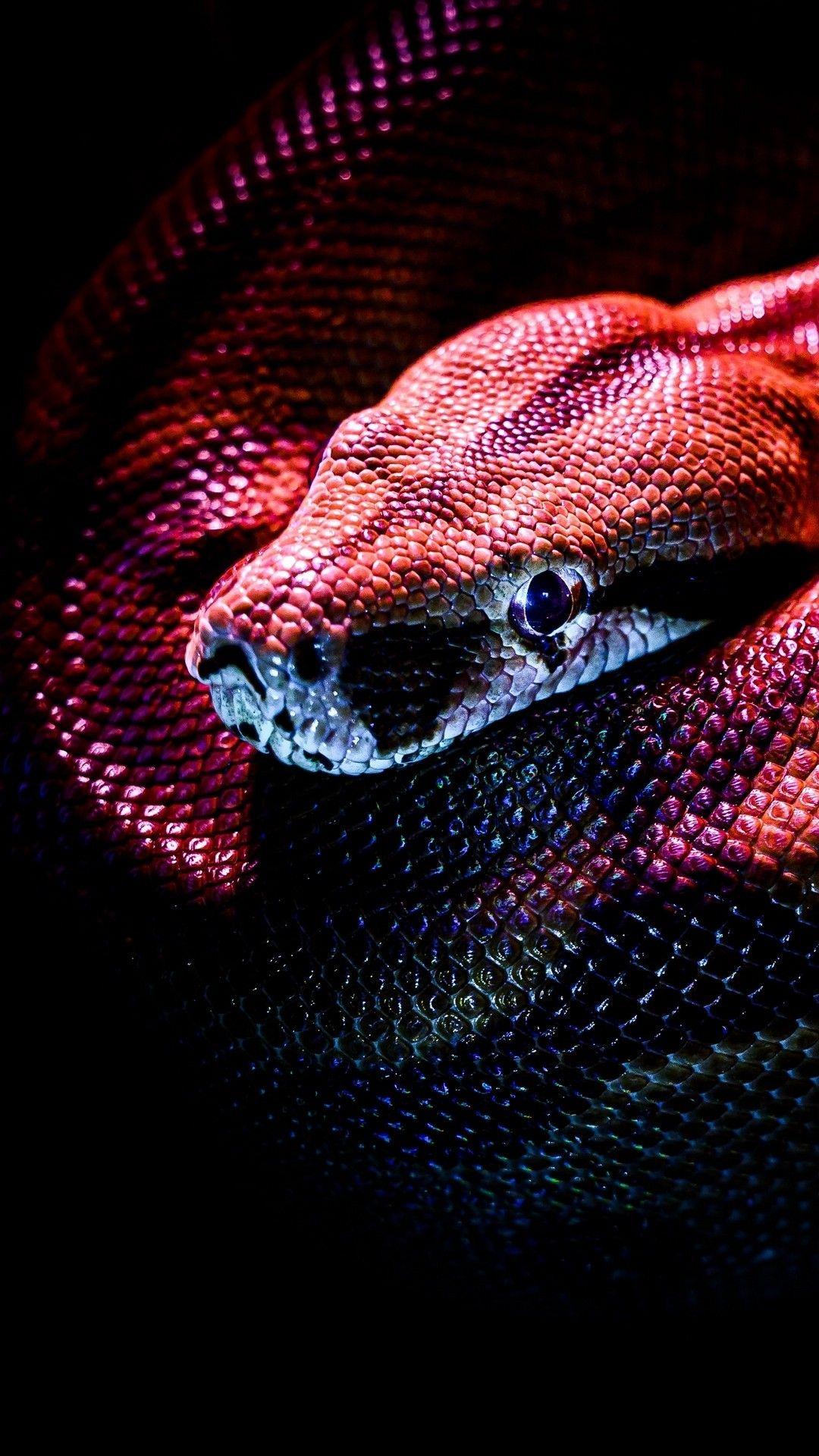 Snake Wallpaper Snake Wallpaper Snake Reptiles