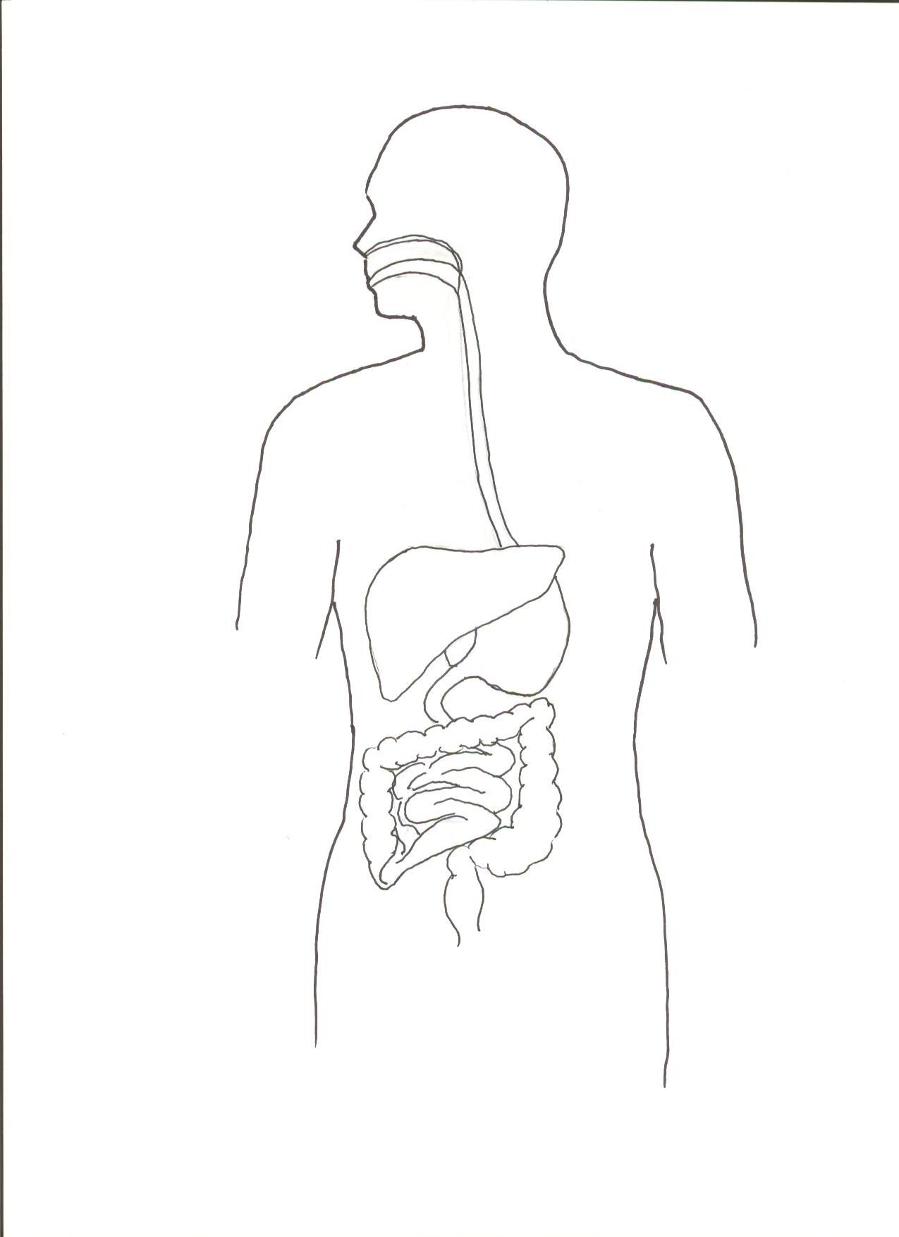 X Worksheet Human Digestive System Worksheet