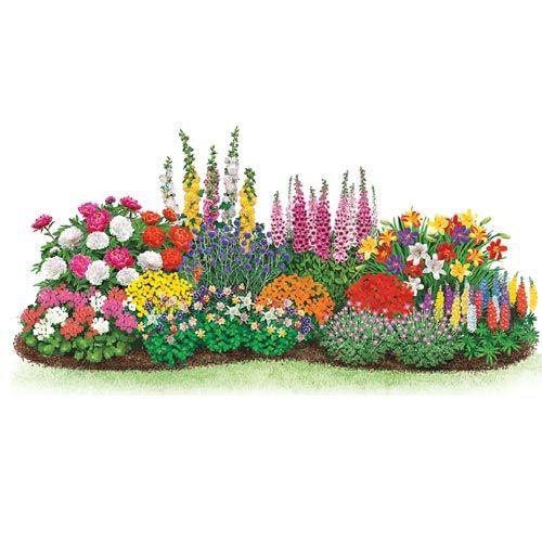 Beginner S Endless Bloom Perennial Garden Perennial 400 x 300