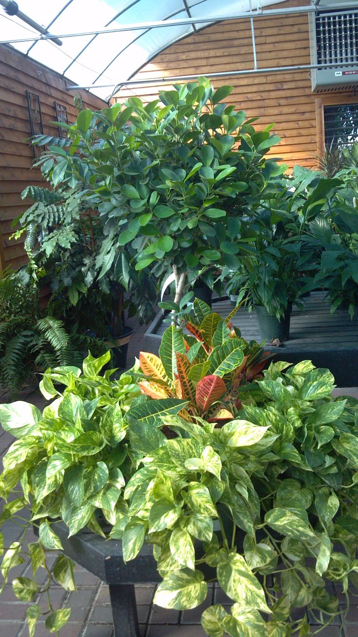 We Ve Got Houseplants On Sale At K W Right Now Get Yours 25 Off
