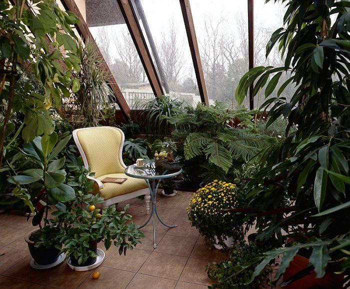 pflanzen-wintergarten-ideen-einrichten-baume-moebel Jardín - tipps pflege pflanzen wintergarten