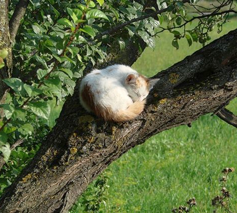 Pin by Alex Brownstein on gone arboreal... Cat nap, Cute