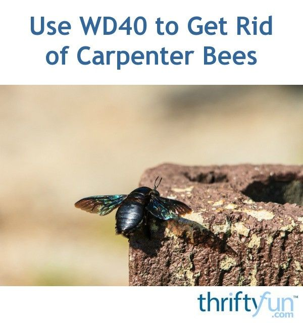Use Wd40 To Get Rid Of Carpenter Bees Carpenter Bee Carpenter Bee Trap Wood Bees
