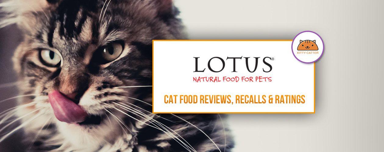 Lotus Cat Food Review Instinct Cat Food Kitten Food Cat Food