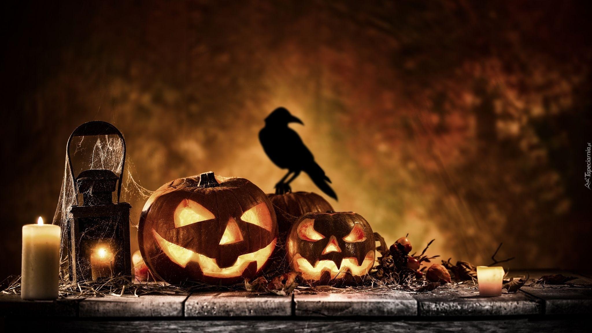 Halloween, Dynie, Świece, Lampion, Ptak Halloween
