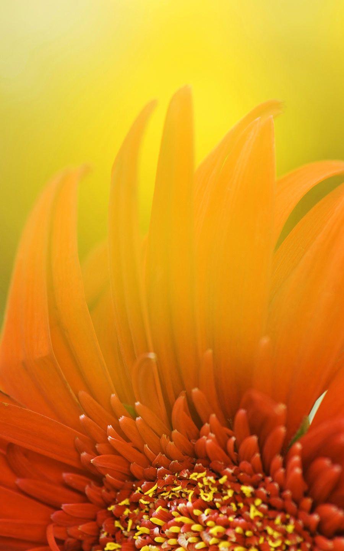 A Midsummer Nights Flowers HD Desktop Wallpaper for K Ultra