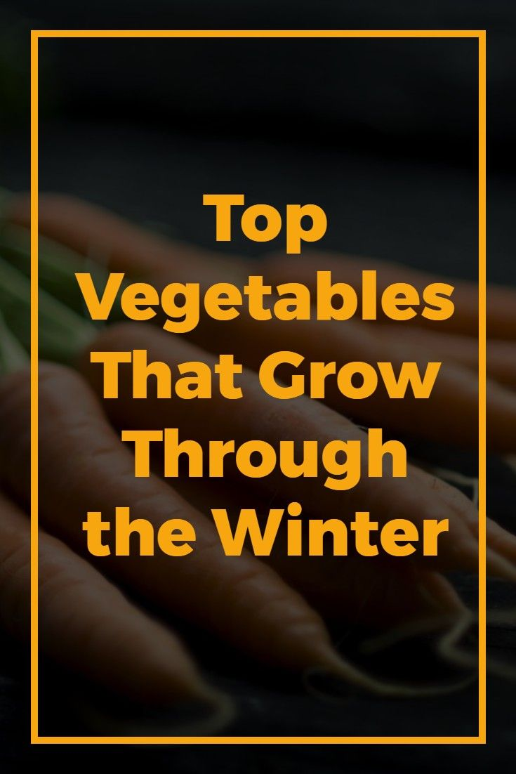Winter Vegetables: What Grows in Cold Weather? | Plants, Winter and ...