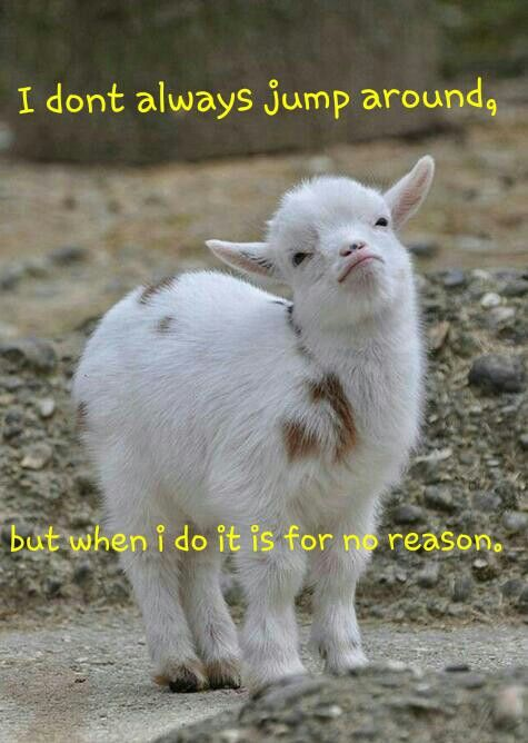 Funny Goat Quote I Made Totes Ma Goats Cute Animals Animals