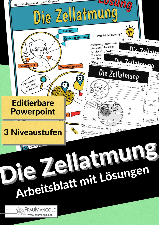 Zellatmung   Arbeitsblatt mit Präsentationsfolien und Lösung ...