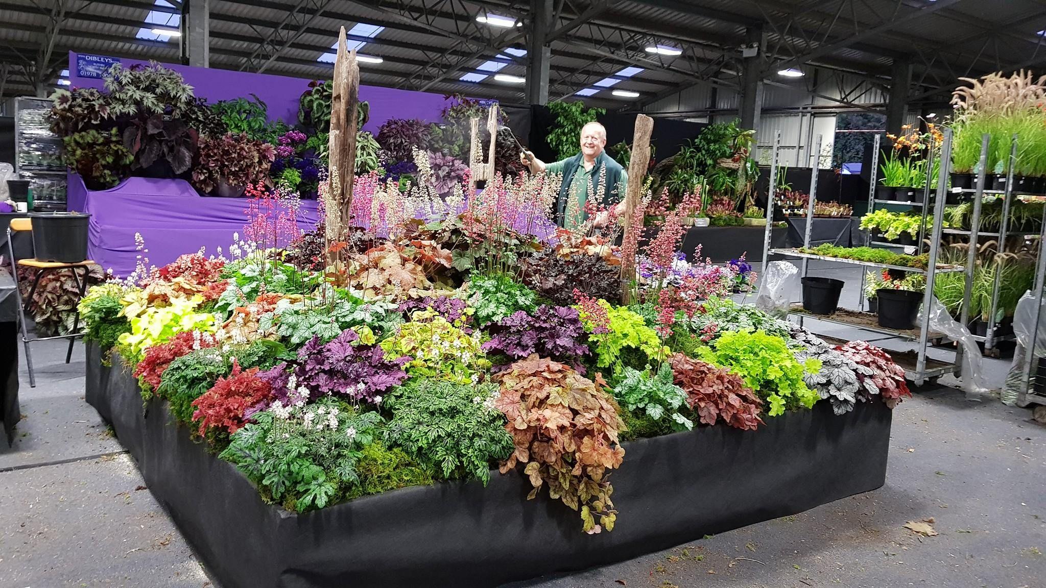 RHS Malvern Autumn Show 2017 | Hardy plants, Heuchera, Plants