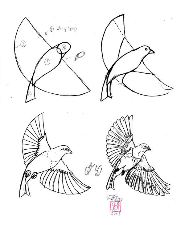 Check Out Other How Tos For Birds And Drawing